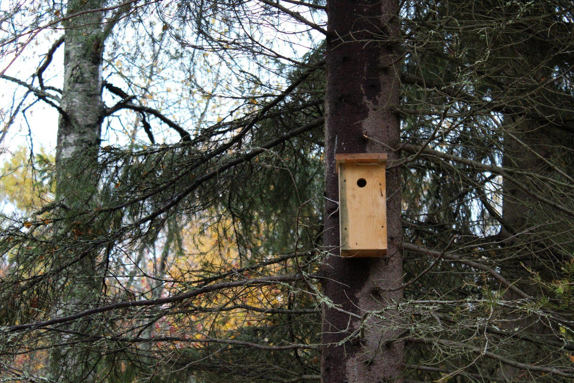 Kiikelissä on satoja talkootyönä tehtyjä linnunpönttöjä.