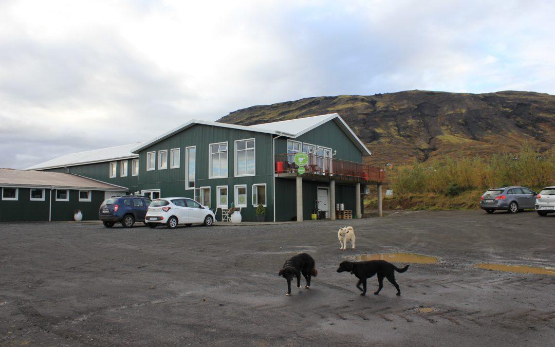 Islanninlehmä on lapinlehmän sukulainen