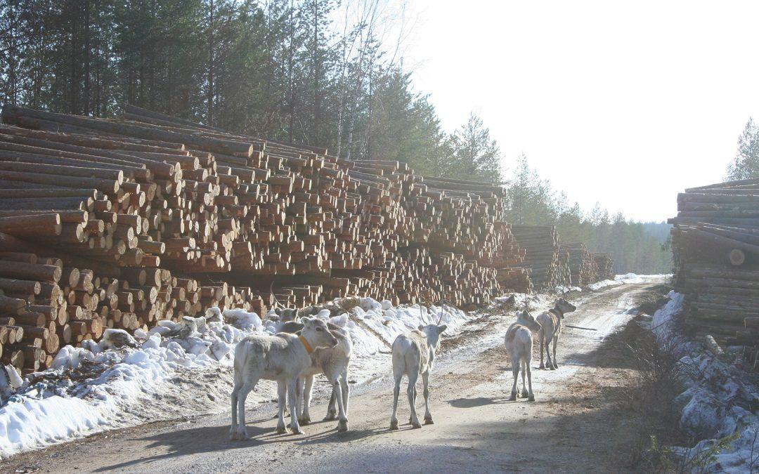 Porotalouden ja metsätalouden suhteet parantuneet