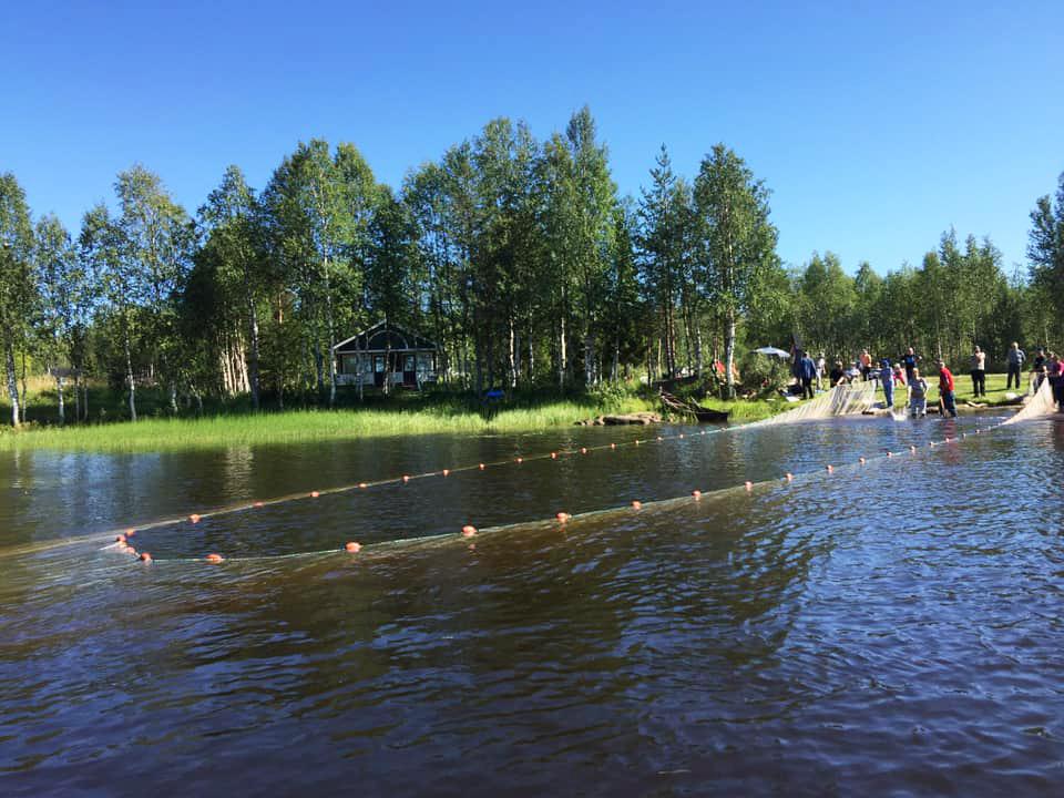 Niesijärven nuottausta kesällä.