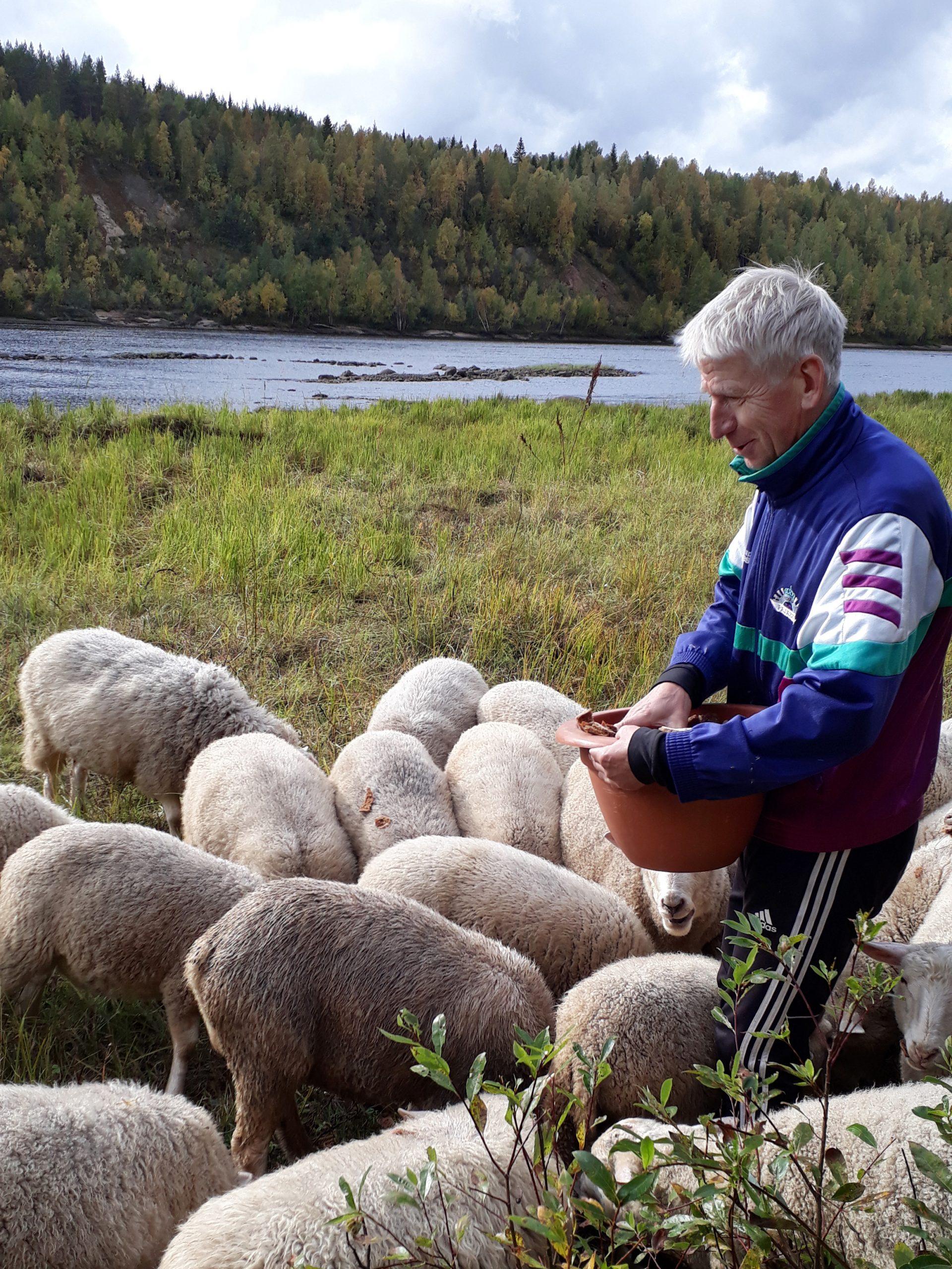 Mies paimentaa lampaita joen varrella.